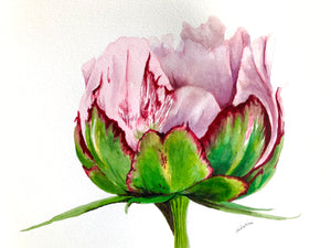 """Pretty in Pink"" Watercolor Florals"