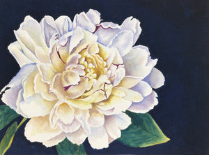 """White Peony"" Watercolor Florals"