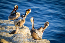 Load image into Gallery viewer, January 16th 2021  6:00 – 10:00 am - La Jolla Pelicans - Bob Fletcher