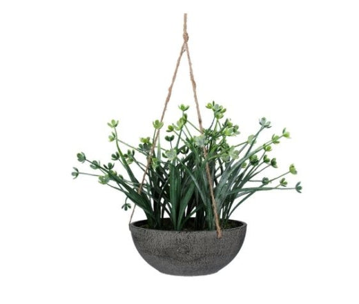 Gisela Japanese Green Wax Flower Hanging Plant