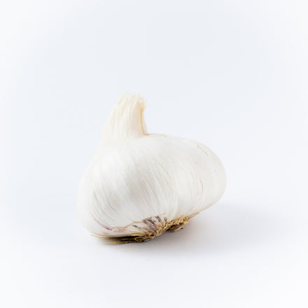 Garlic, Jumbo White