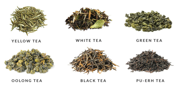 Six Chinese Tea Types