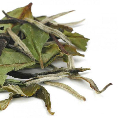 Organic White Tea - Bai Mu Dan loose leaves