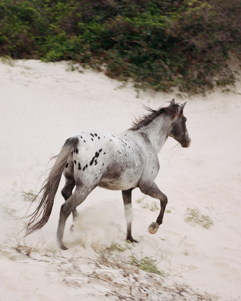 "Sara Donaldson Photography | Spirit Animal Series | ""Wild"" 