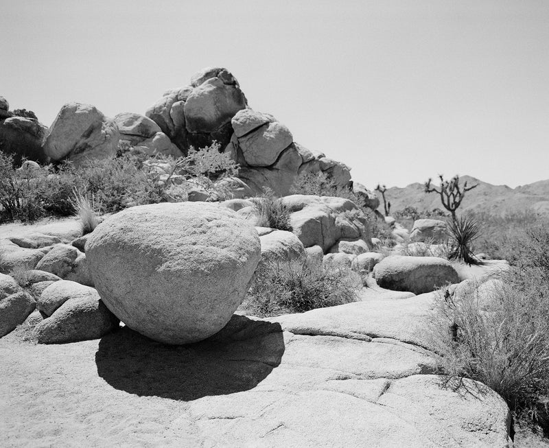 "Sara Donaldson Photography | Joshua Tree Series | ""Weathered"" 