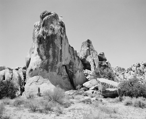 "Sara Donaldson Print Shop | Joshua Tree Series | ""Rugged"" 