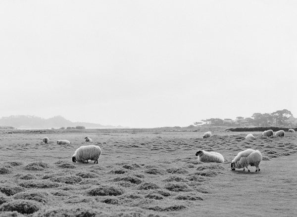 "Sara Donaldson Print Shop | Vista Series | ""Mission Ranch Meadow "" 