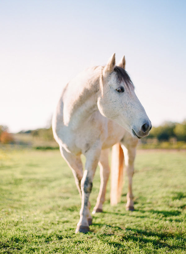 Spirit Animal Series | Mystic | A beautiful horse with mystical, regal forces. Features the signature milky, buttery tones of sun-kissed Fuji film. Medium format photograph on Fuji 400h.