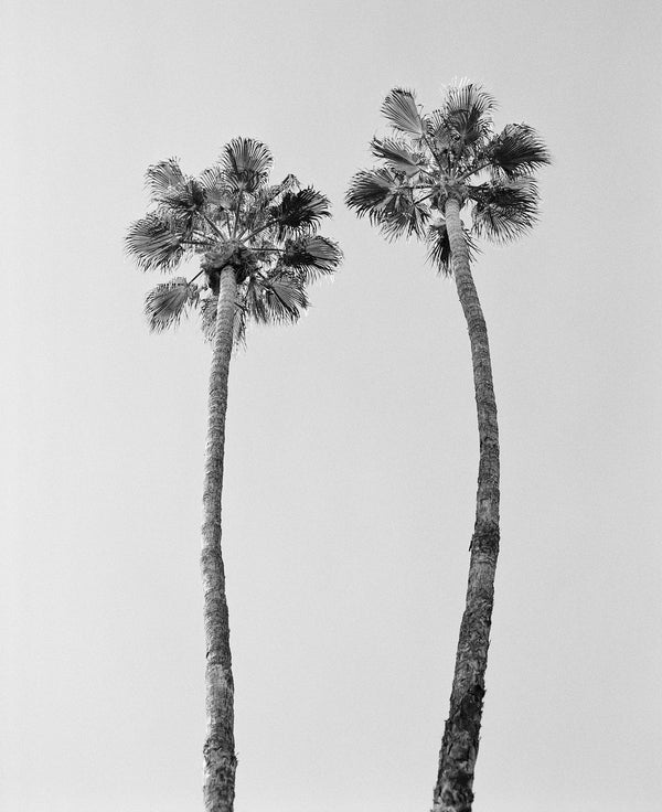 "Sara Donaldson Photograph | Growth Series | ""Pair of Palms"" 