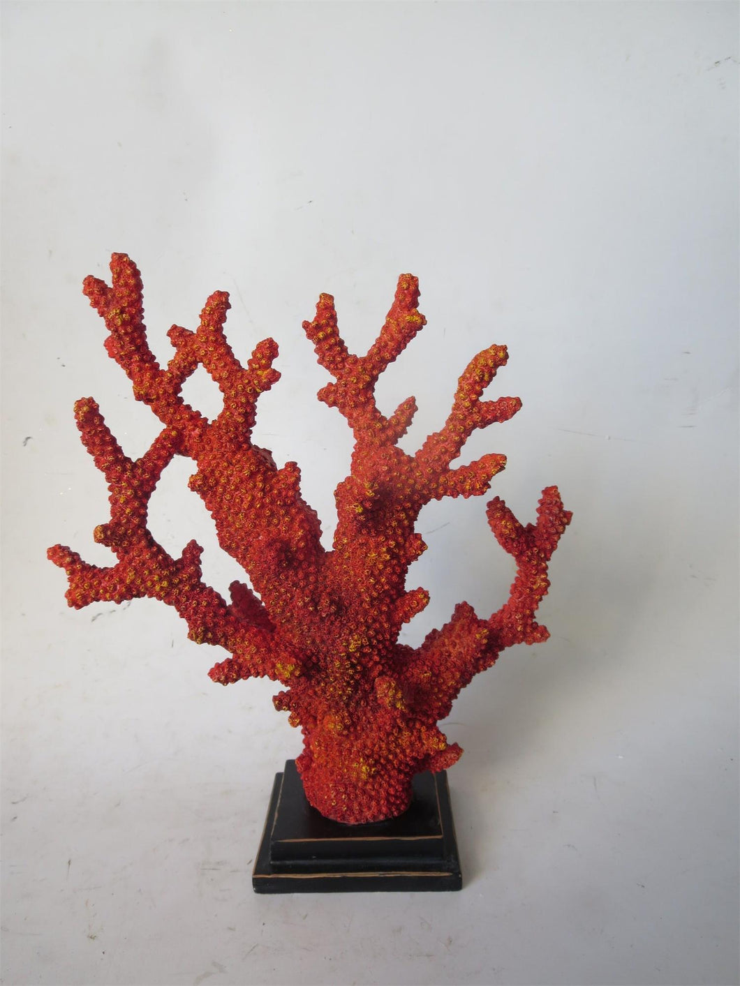 Orange Coral on Base