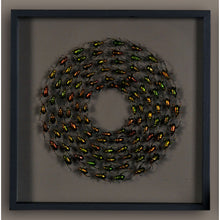 Load image into Gallery viewer, Framed Beetles, copper/green
