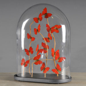 Oval Glass Dome with Red Butterflies
