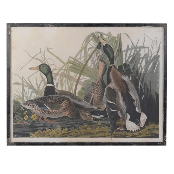'The Mallards' Framed Picture