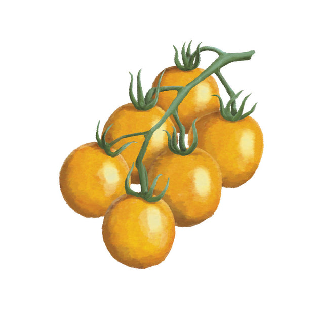 Tomat 'Clementine'
