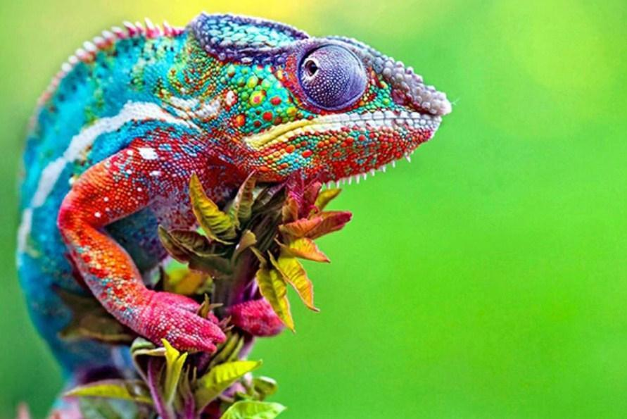 Amazing Chameleon - Paint by Diamonds - diamond-painting-bliss.myshopify.com