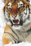 Angry Tiger - diamond-painting-bliss.myshopify.com