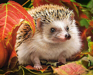 Autumn Hedgehog Painting Kit - diamond-painting-bliss.myshopify.com