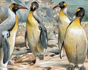 Beautiful Penguins - Paint with Diamonds - diamond-painting-bliss.myshopify.com