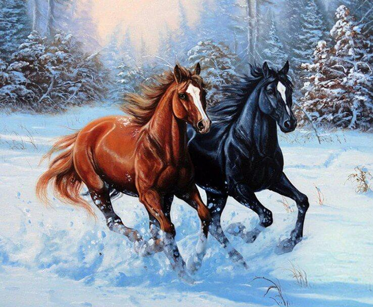 Black & Brown Horses Painting - diamond-painting-bliss.myshopify.com