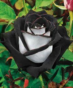 Black & White Rose - diamond-painting-bliss.myshopify.com