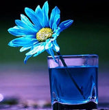 Blue Daisy in Glass - diamond-painting-bliss.myshopify.com