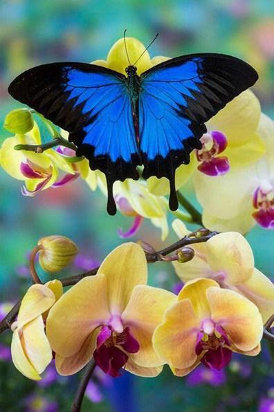 Blue Mountain Swallowtail Butterfly - diamond-painting-bliss.myshopify.com
