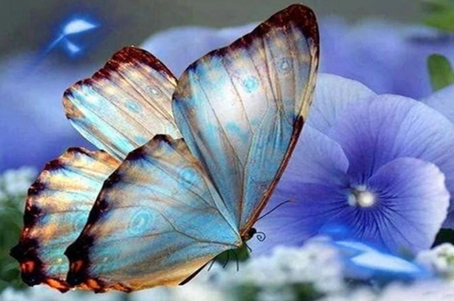 Blue Orchids & Butterfly - diamond-painting-bliss.myshopify.com