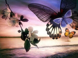 Butterflies & Landscape Beauty - diamond-painting-bliss.myshopify.com