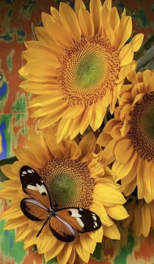 Butterfly on Sunflower - diamond-painting-bliss.myshopify.com