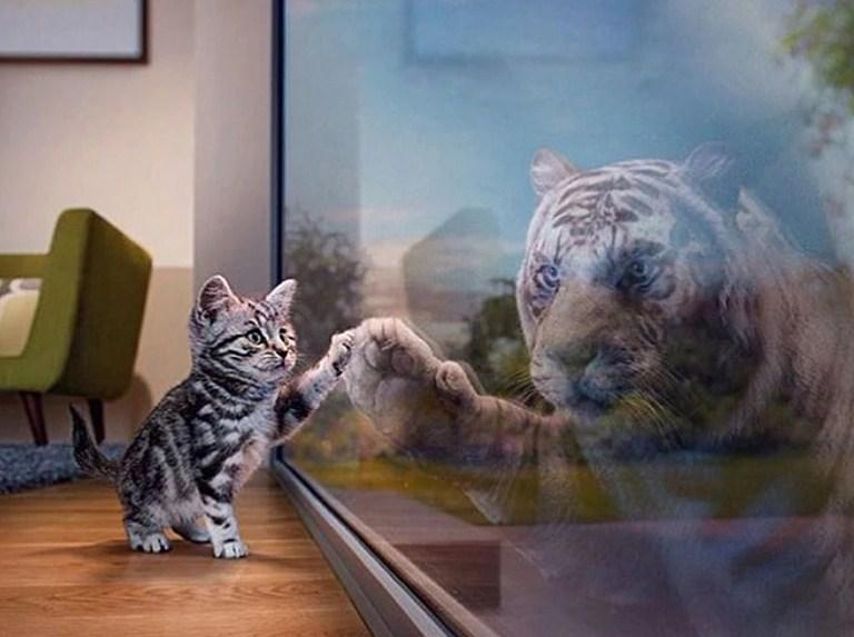 Cat & Tiger Reflection - diamond-painting-bliss.myshopify.com