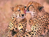 Cheetah Pair in Love - diamond-painting-bliss.myshopify.com