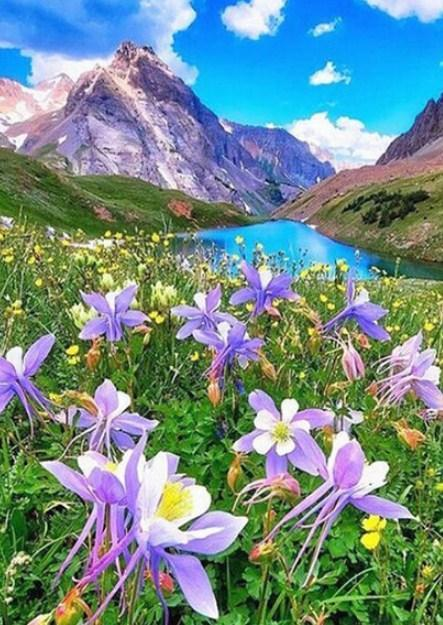 Columbine Flower in Mountains - diamond-painting-bliss.myshopify.com