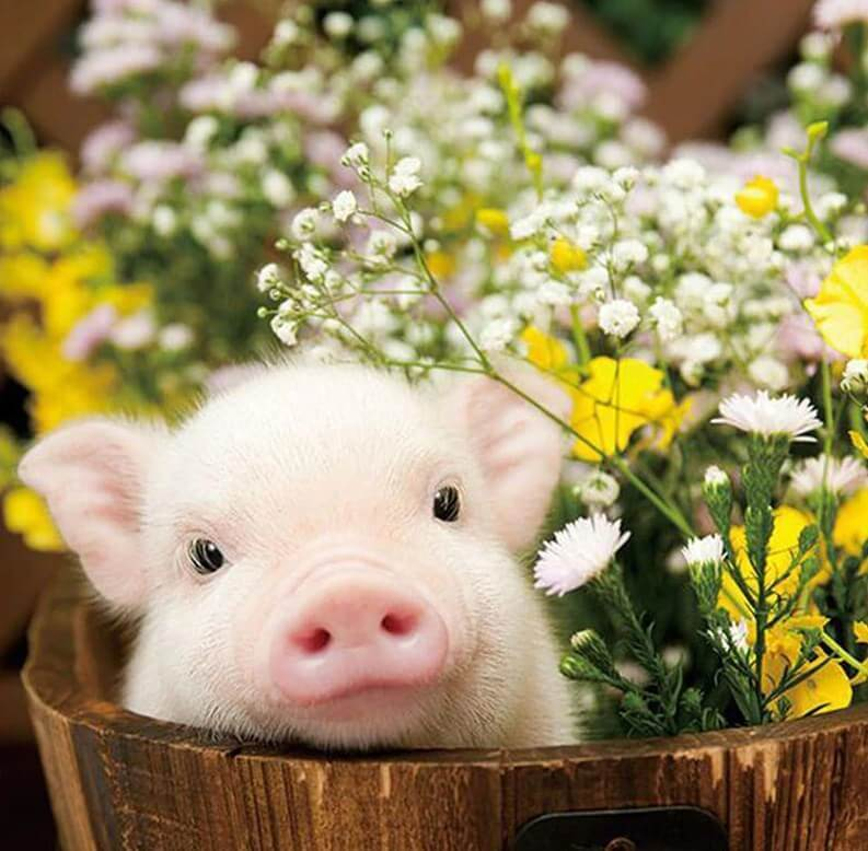Cute Pig & Flowers - diamond-painting-bliss.myshopify.com