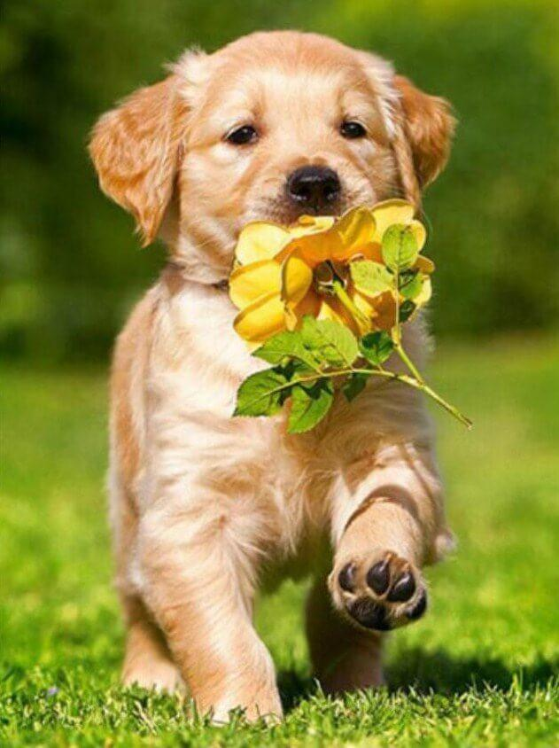 Dog Running with Flower in Mouth - diamond-painting-bliss.myshopify.com
