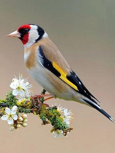 European Goldfinch - diamond-painting-bliss.myshopify.com