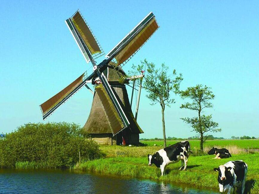 Grazing Cows & Windmill Painting - diamond-painting-bliss.myshopify.com