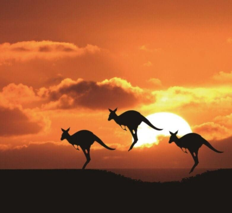 Kangaroos & Sunset Diamond Painting - diamond-painting-bliss.myshopify.com