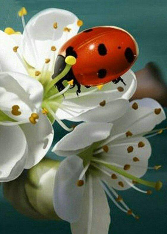 Lady Bug & White Flowers - diamond-painting-bliss.myshopify.com