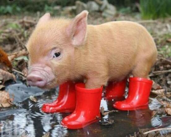 Little Pig in Red Boots - diamond-painting-bliss.myshopify.com