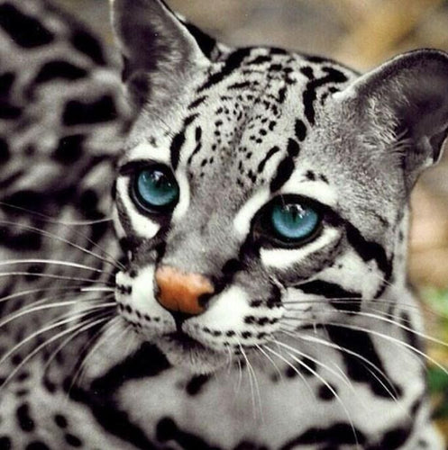Ocelot Cat- Diamond Painting Kit - diamond-painting-bliss.myshopify.com