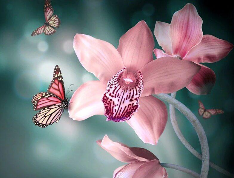 Orchids & Butterflies Diamond Painting - diamond-painting-bliss.myshopify.com