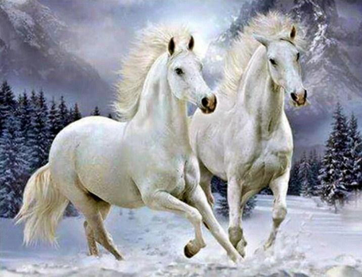 Pair of White Horses Diamond Painting - diamond-painting-bliss.myshopify.com