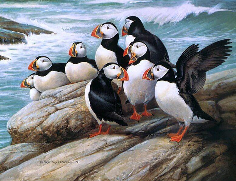 Puffins Diamond Painting Kit - diamond-painting-bliss.myshopify.com