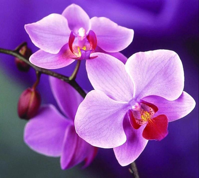 Purple Orchids Diamond Painting Kit - diamond-painting-bliss.myshopify.com