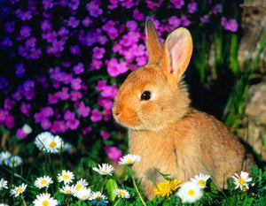 Rabbit Sitting in Flowers - diamond-painting-bliss.myshopify.com
