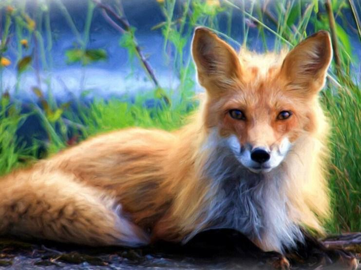 Red Fox - Paint with Diamonds - diamond-painting-bliss.myshopify.com