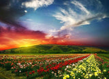 Red Sky & Flower Beds - diamond-painting-bliss.myshopify.com