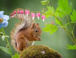Red Squirrel & Flowers - diamond-painting-bliss.myshopify.com