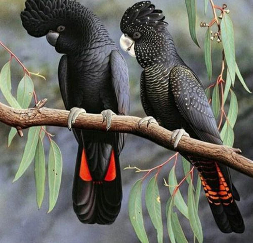Red Tailed Black Cockatoo Pet - diamond-painting-bliss.myshopify.com