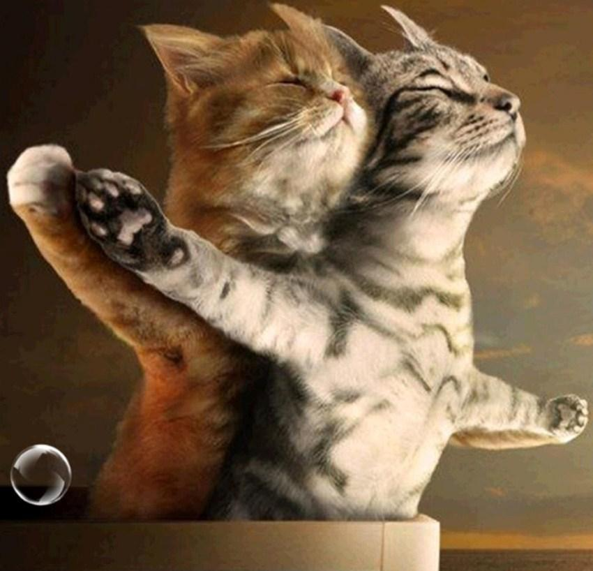 Romantic Cat Couple - diamond-painting-bliss.myshopify.com